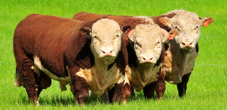 Agregar Carnes